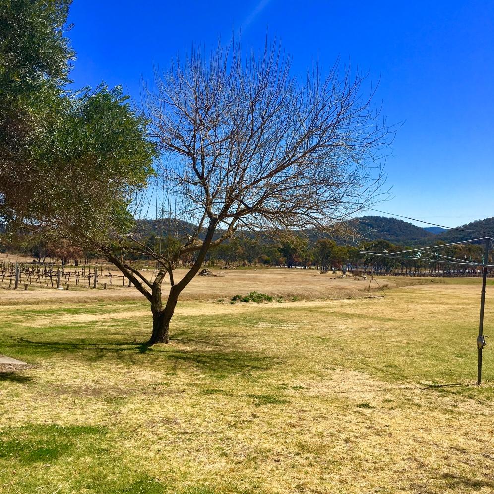 Tobin Wines vineyard